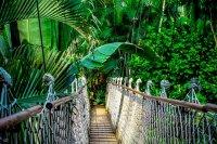 most w dżunglii